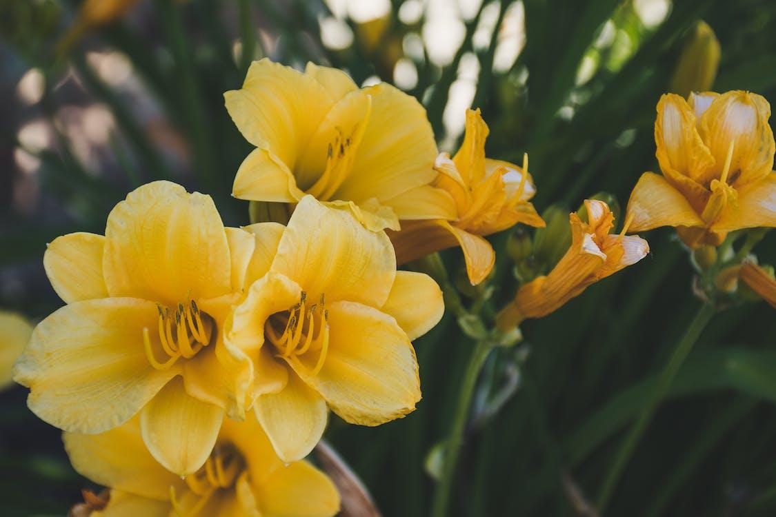 amarillo, bonito, brillante