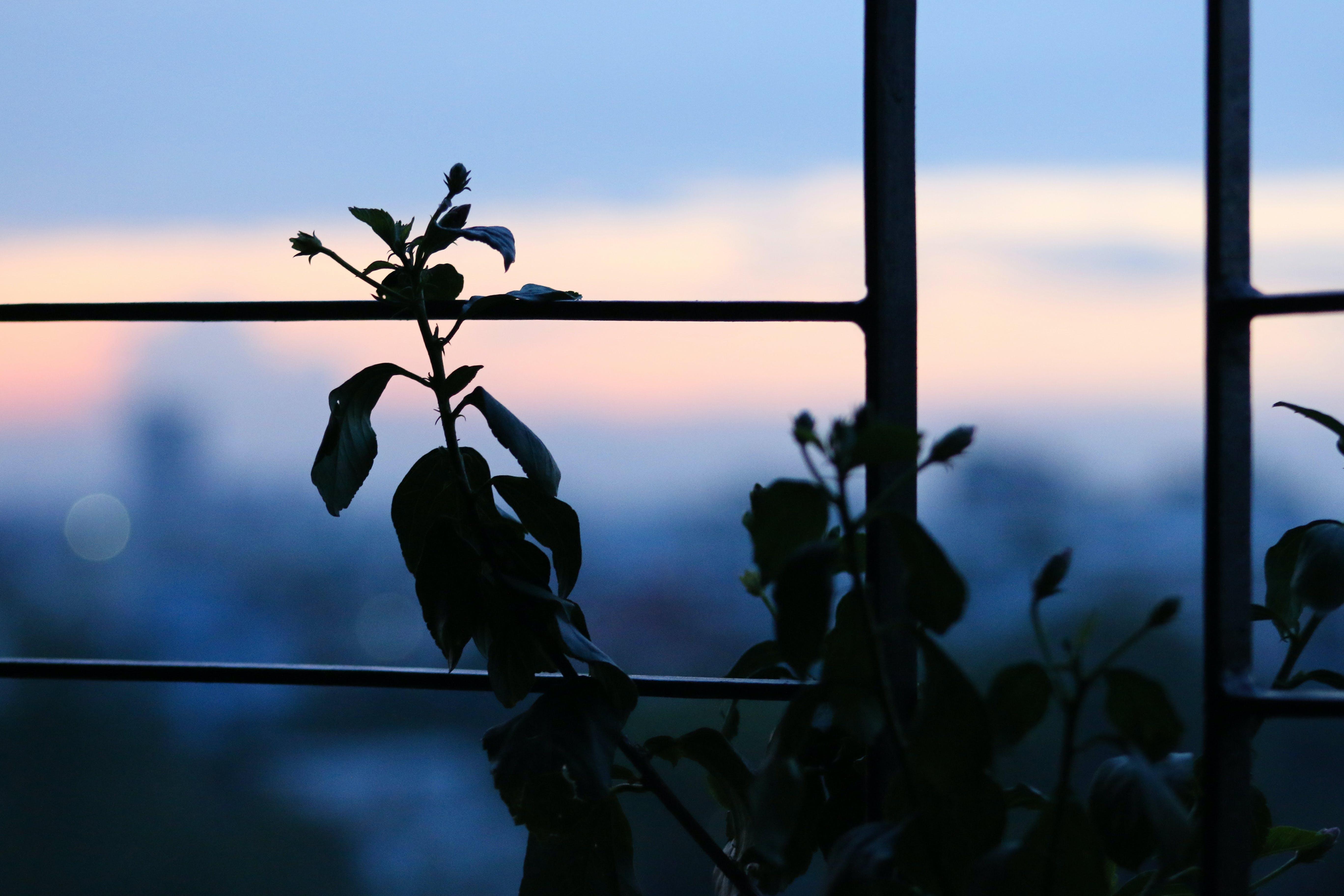 Silhouette Photo of Flower Beside Metal Frame