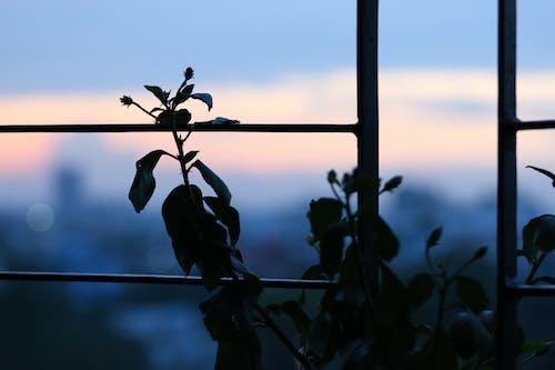 Kostenloses Stock Foto zu blütenknospen, himmel, landschaft, pflanzen