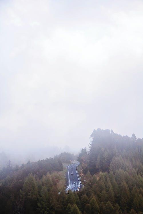 Immagine gratuita di alba, ambiente, foresta, luce del giorno