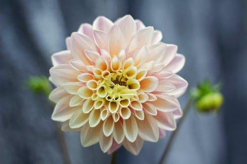 增長, 微妙, 明亮, 植物群 的 免费素材照片