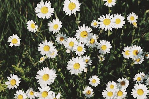 Foto stok gratis bunga musim panas, bunga-bunga indah, musim panas