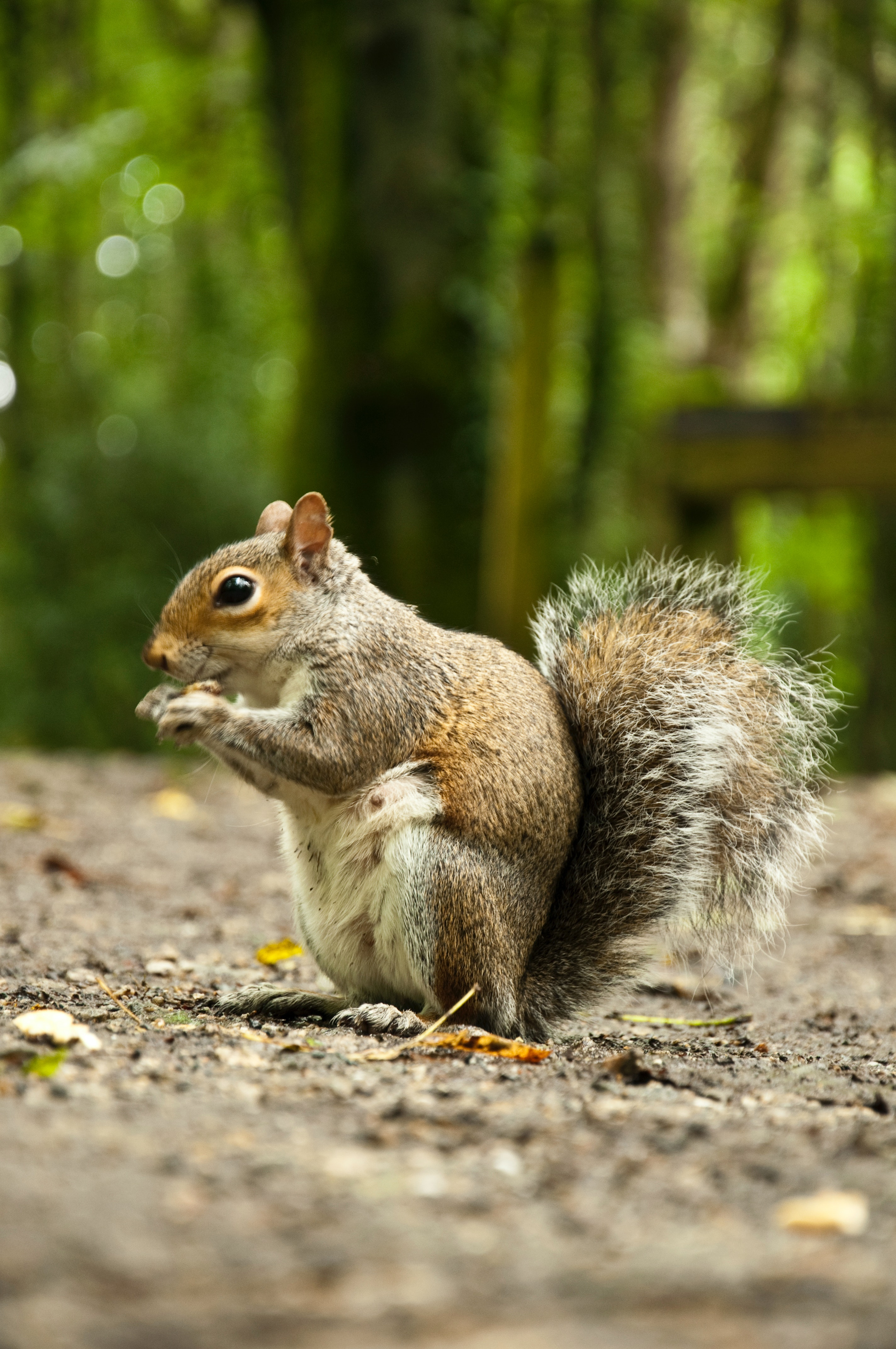 Two Squirrels On Tree Trunk  C2 B7 Free Stock Photo
