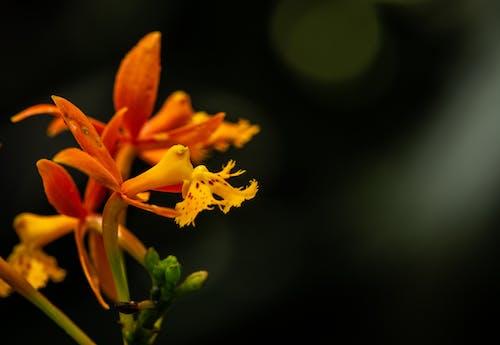 Foto profissional grátis de amarelo, carta, cartas, flor