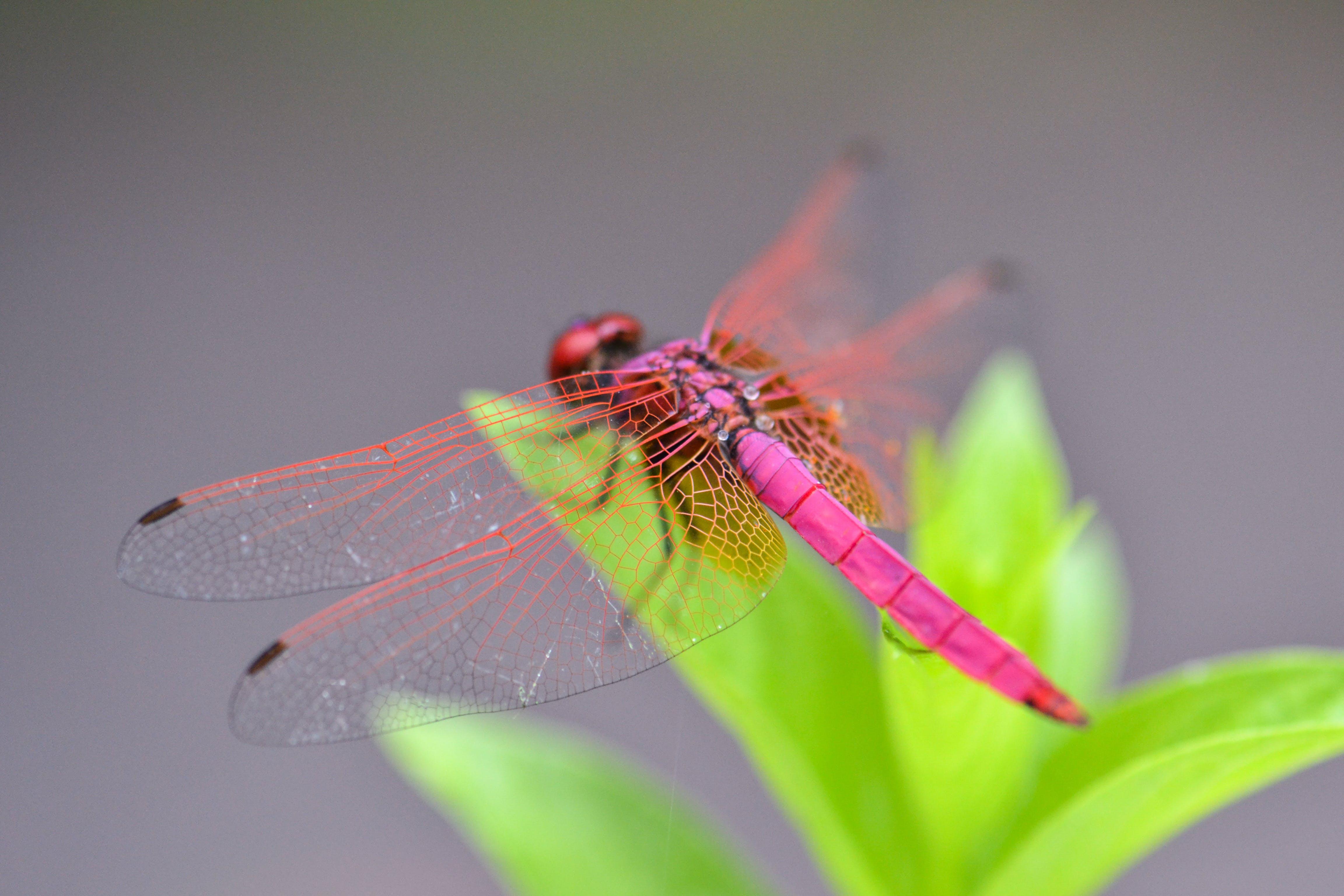곤충, 날개, 다채로운, 밝은의 무료 스톡 사진