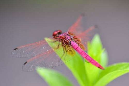 Foto profissional grátis de asas, brilhante, cheio de cor, cores claras