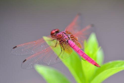 Безкоштовне стокове фото на тему «бабка, барвистий, комаха, комахи»