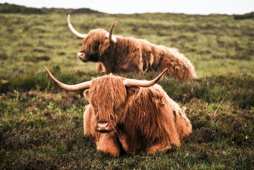 動物, 哺乳動物, 家畜, 景觀 的 免費圖庫相片