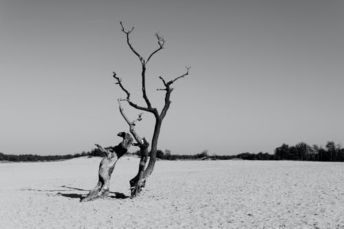 Grayscale Photography of Drift Wood