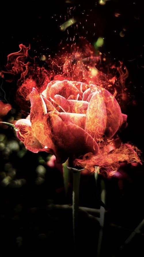 Free stock photo of Adobe Photoshop, beauty, digital art, fire