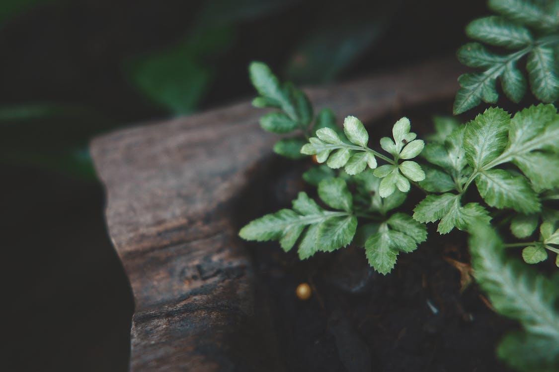 cây vườn, lá xanh