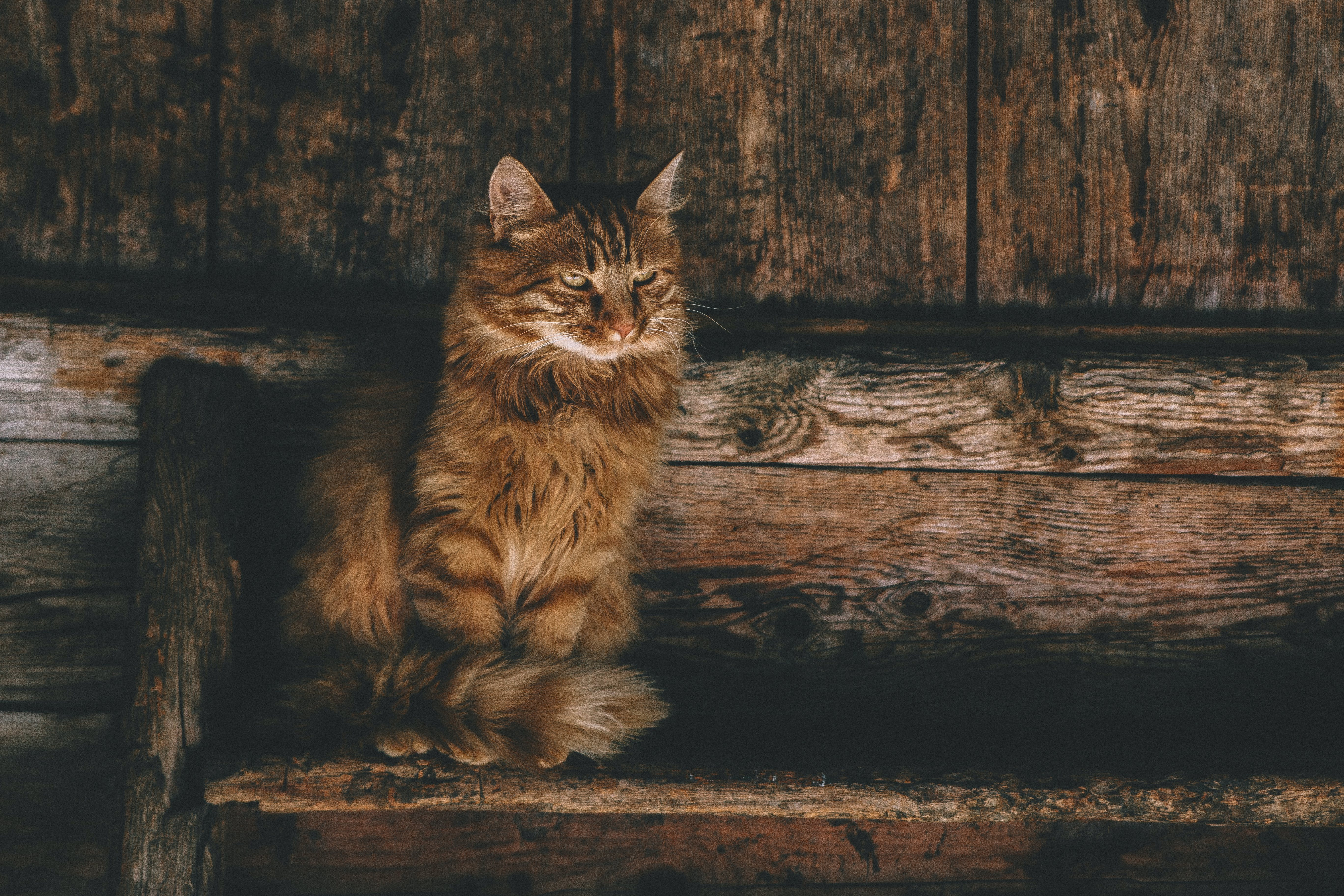 Photo of Brown Persian Cat on Ladder