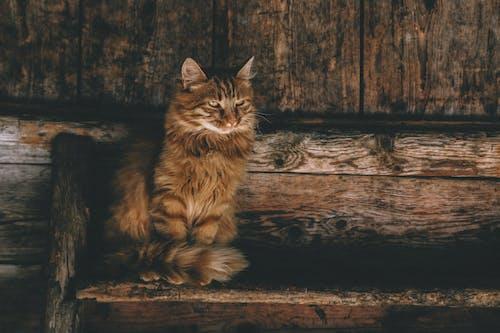 Imagine de stoc gratuită din animal, animal de casă, blană, căutare