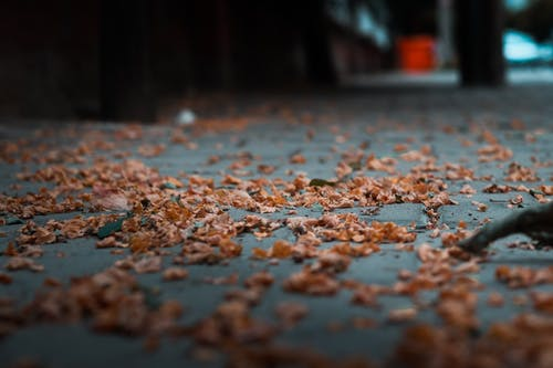 Free stock photo of autumn decoration, autumn mood forest, colors of autumn
