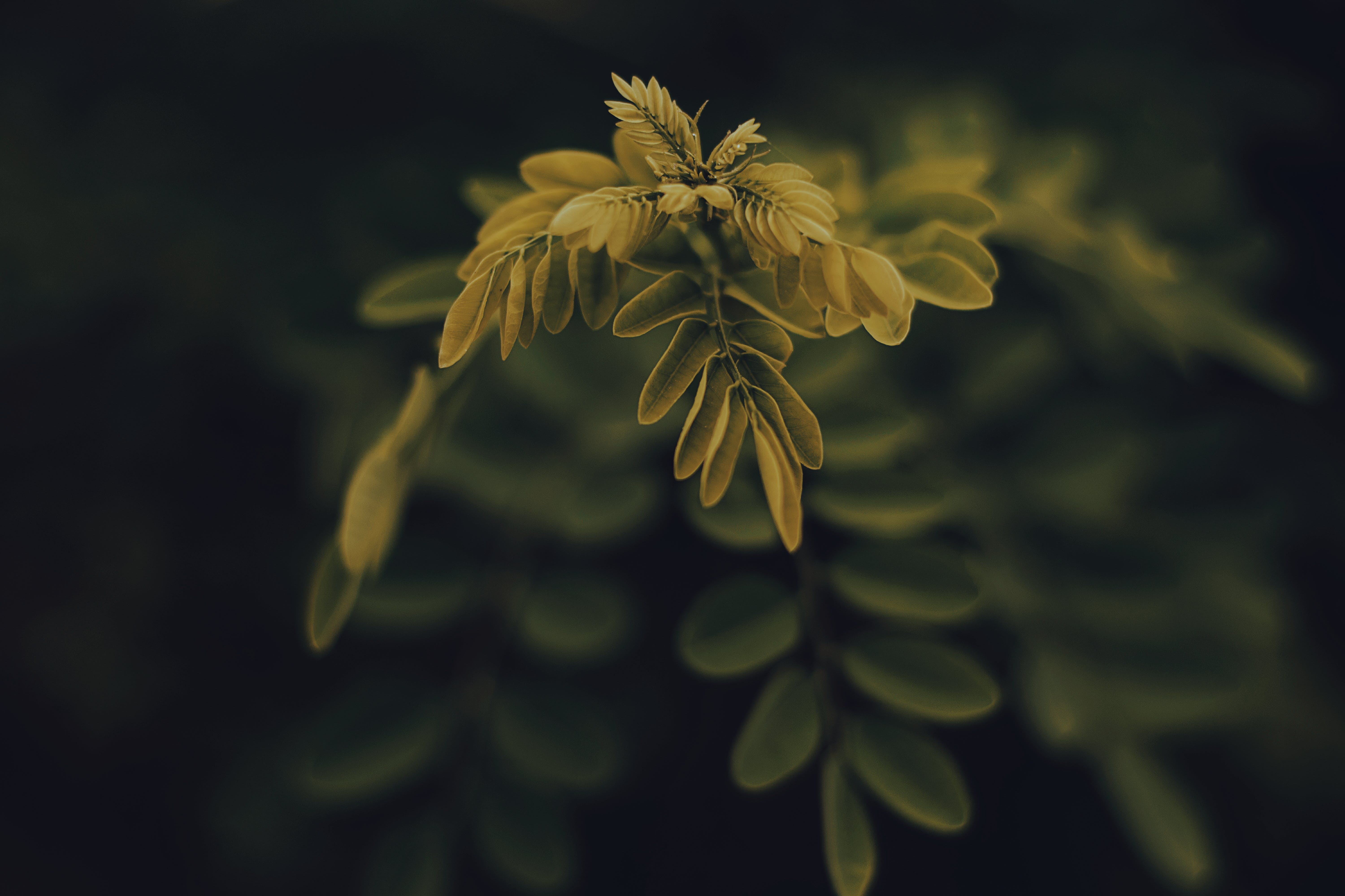Shallow Focus Photography of Yellow Leafed Plant