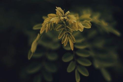 Бесплатное стоковое фото с ветвь, красивый, природа, размытый