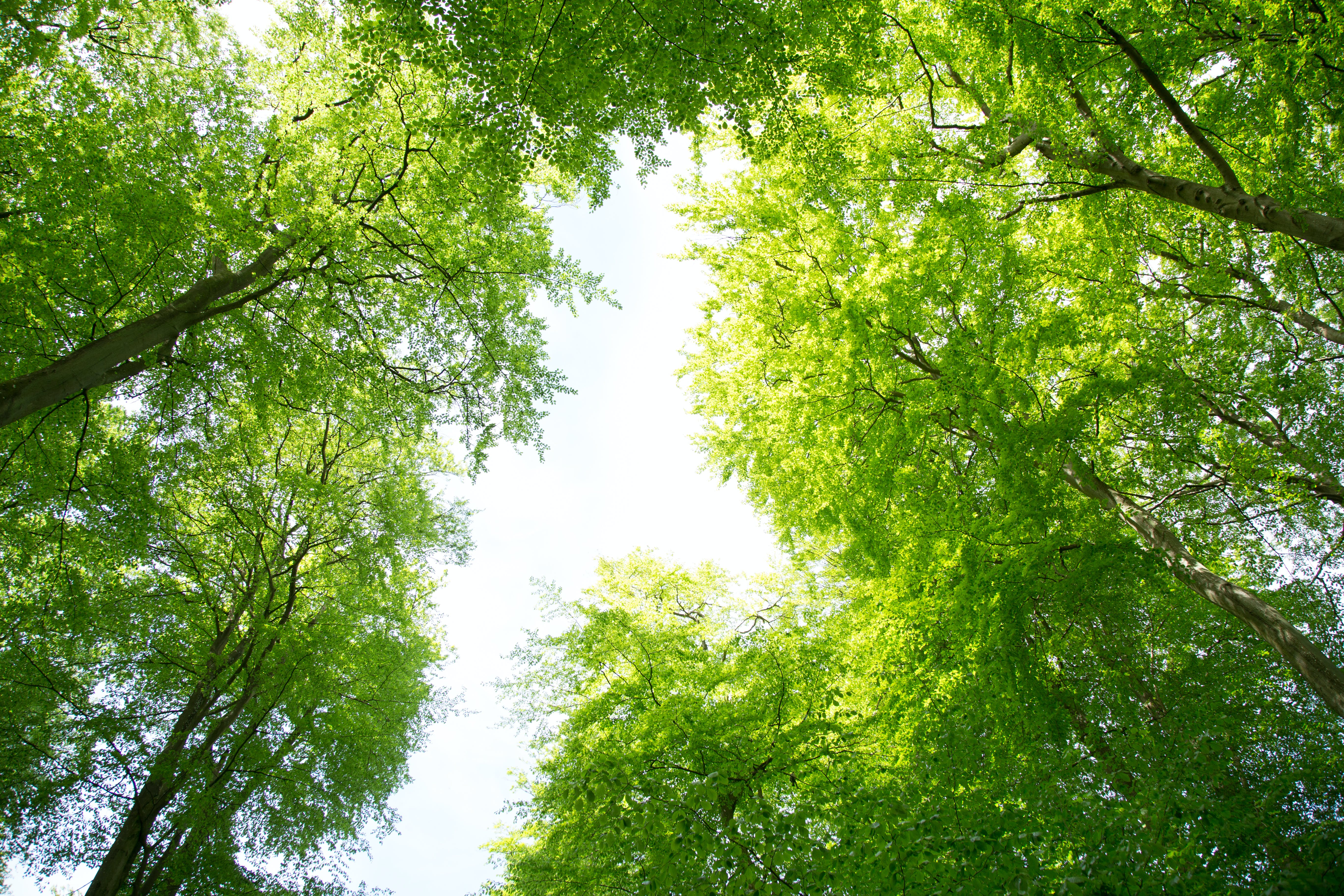 Free stock photo of forest, green, summer, trees