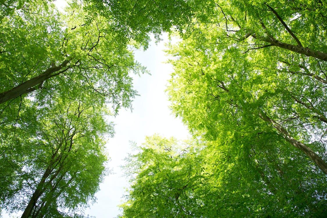 drzewa, las, lato