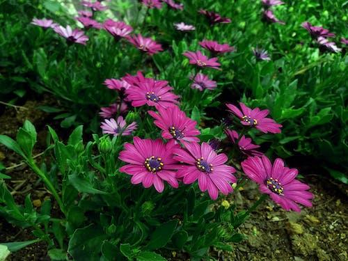 Бесплатное стоковое фото с флора, цвести, цветение, цветы
