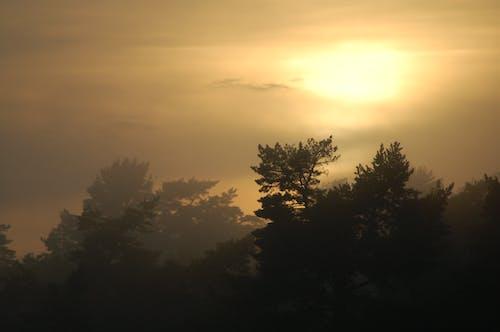 Darmowe zdjęcie z galerii z chmury, drzewa, mgła, zachód słońca