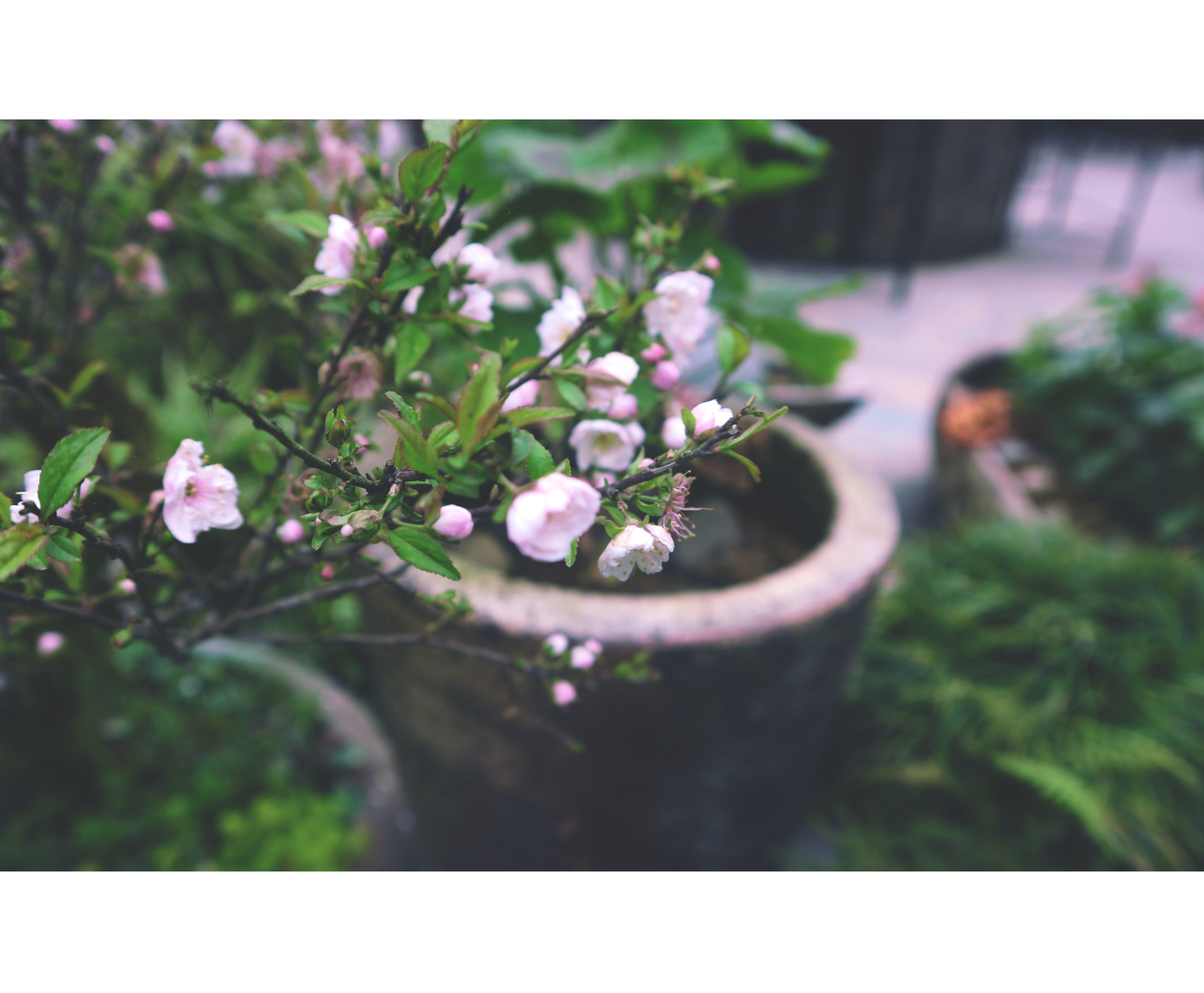 Δωρεάν στοκ φωτογραφιών με όμορφα λουλούδια, σκούρο πράσινο