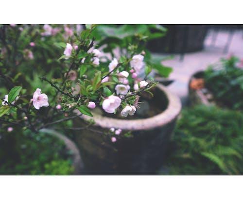 Gratis stockfoto met donkergroen, mooie bloemen