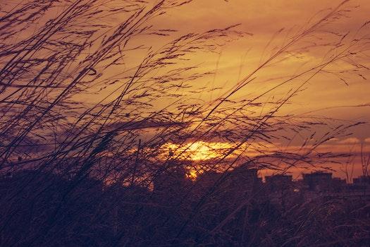 Kostenloses Stock Foto zu licht, natur, sonnenaufgang, morgen