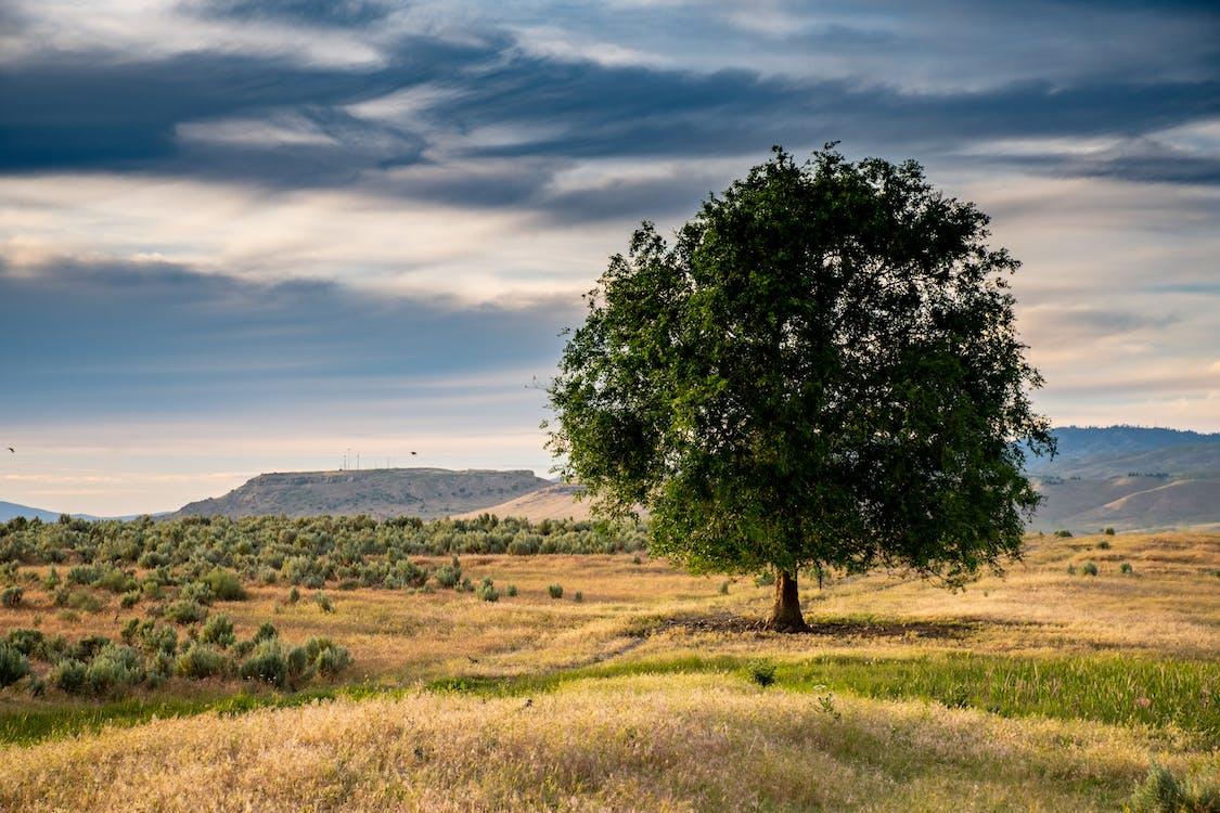 กลางวัน, ต้นไม้, ท้องฟ้า
