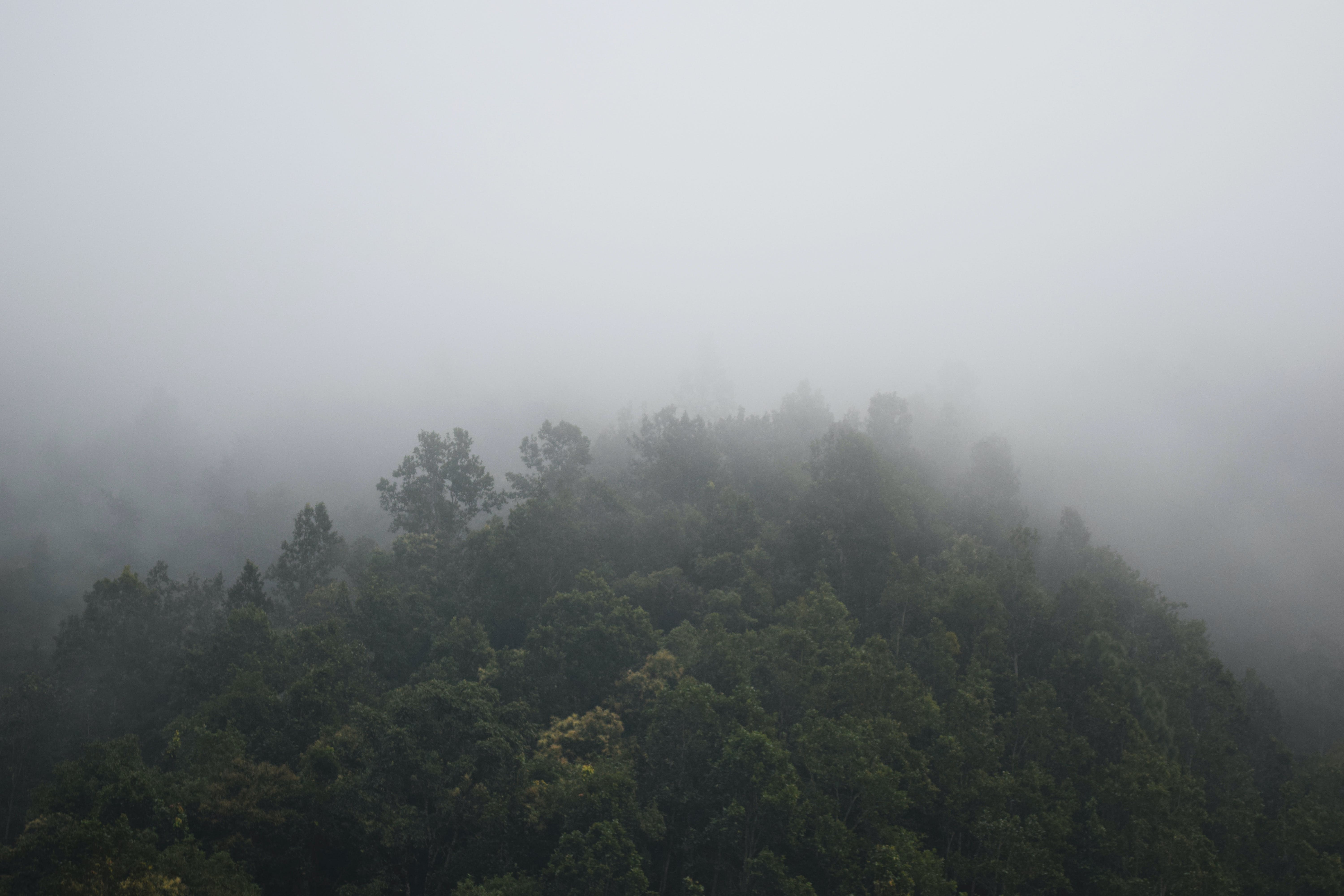 Foggy Mountain With Green Trees