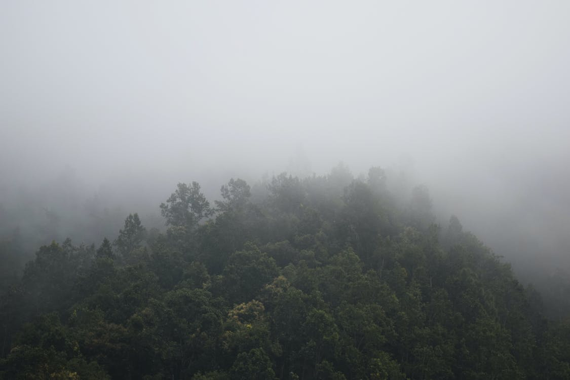 山, 木, 森林