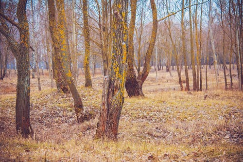 Ilmainen kuvapankkikuva tunnisteilla luonto, metsä