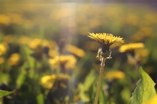 Gratis lagerfoto af bane, bjælke, blomster, dag