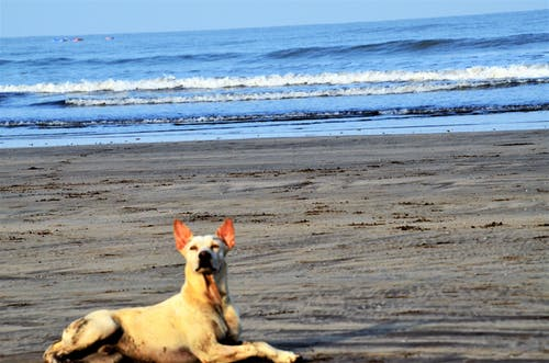 Imagine de stoc gratuită din câine, faleză, mândrie, mare
