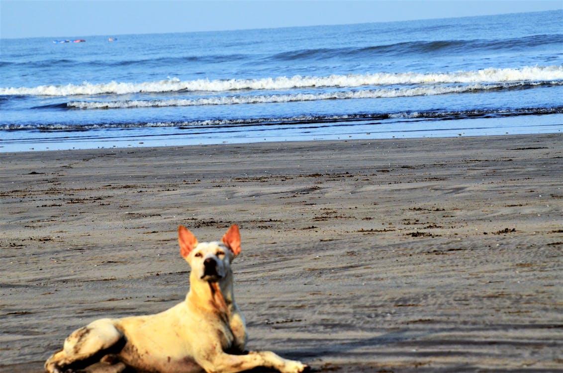 hund, pride, sand