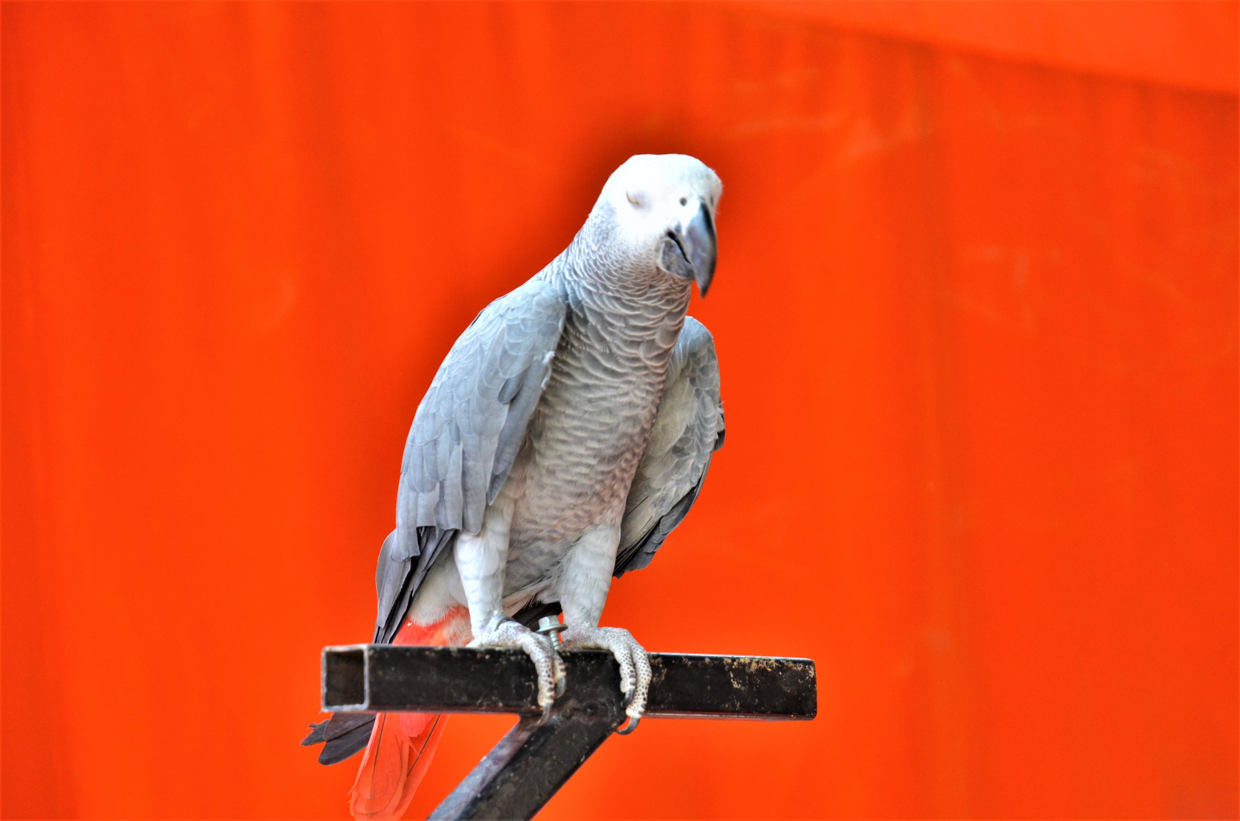 Free stock photo of #bird, bird, happy, meditate