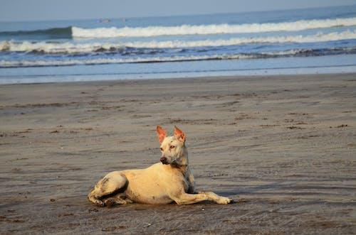 Foto d'estoc gratuïta de gos, mar, orgull, platja