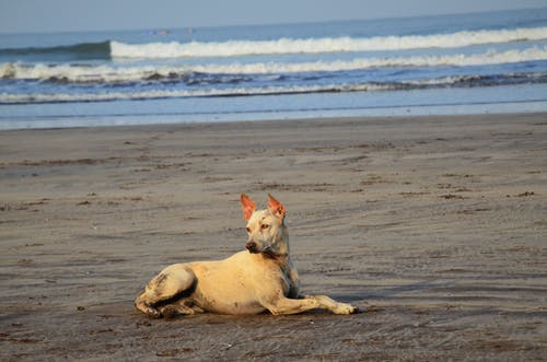Gratis arkivbilde med hund, pride, sand, sjø