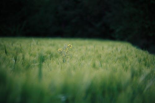 คลังภาพถ่ายฟรี ของ ชนบท, ดอกไม้, ถนนในชนบท, ทุ่งหญ้า
