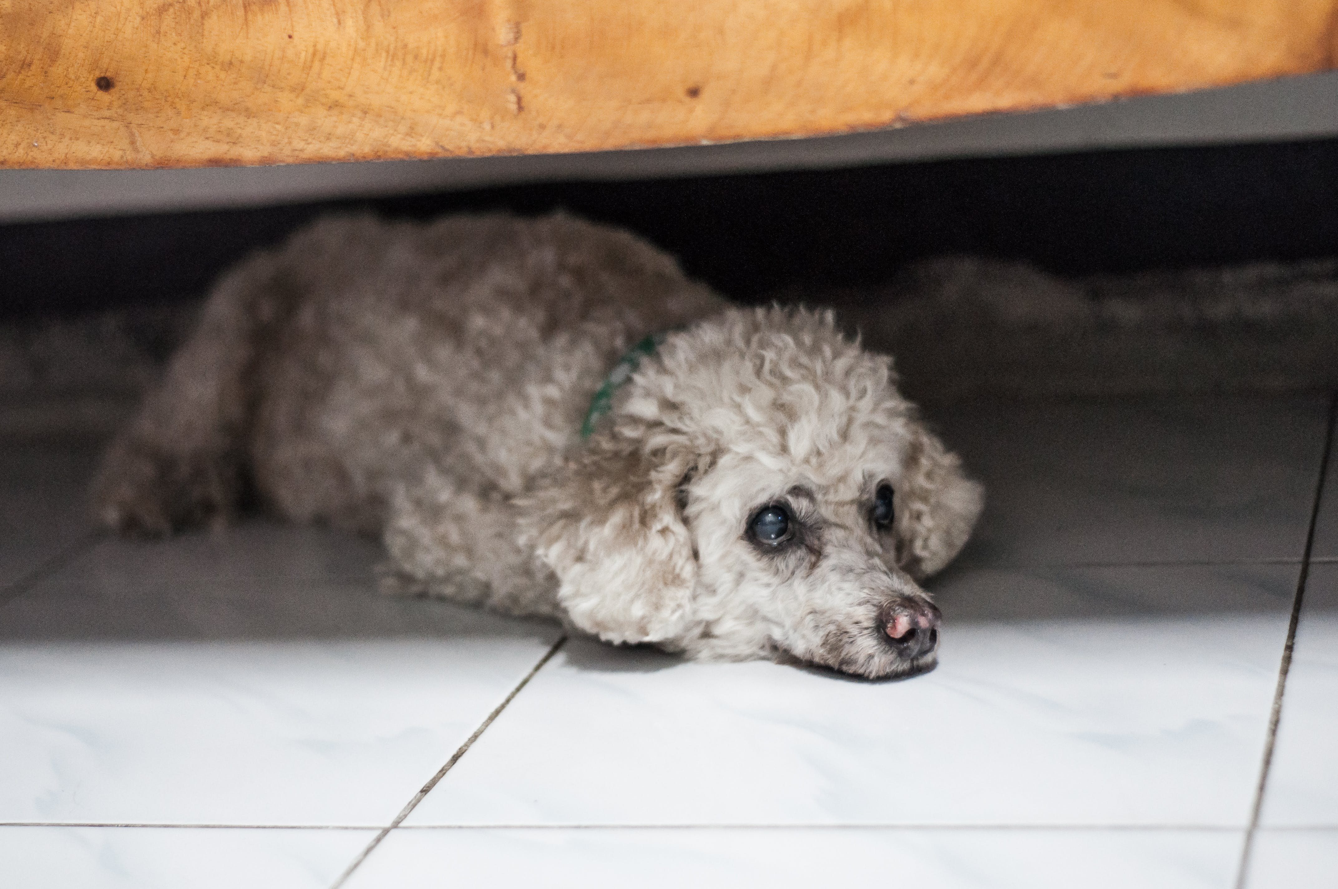 Free stock photo of #dog