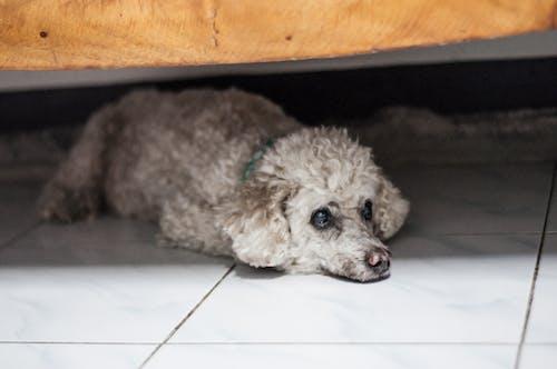 Fotobanka sbezplatnými fotkami na tému #dog