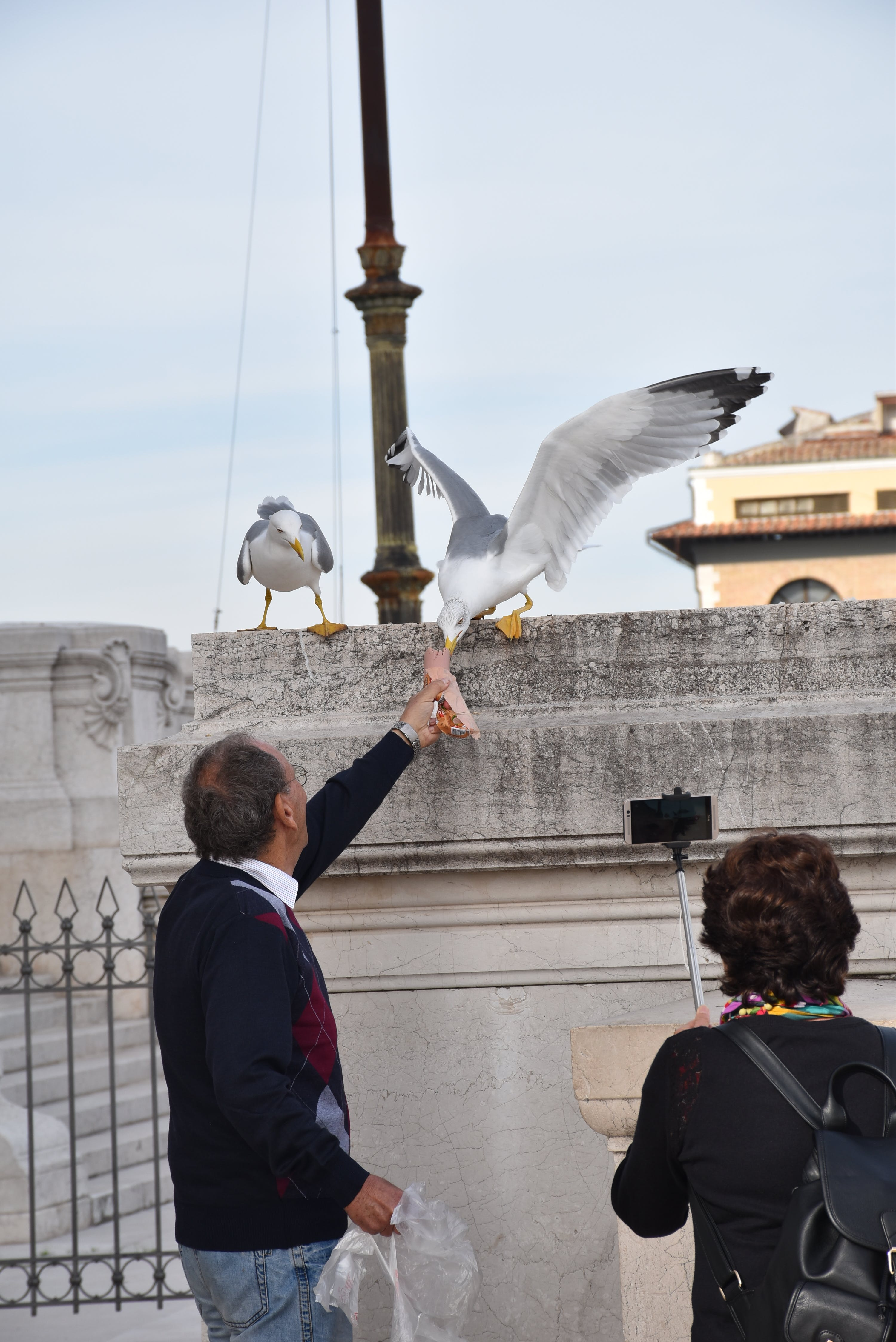 Free stock photo of birds, tourists