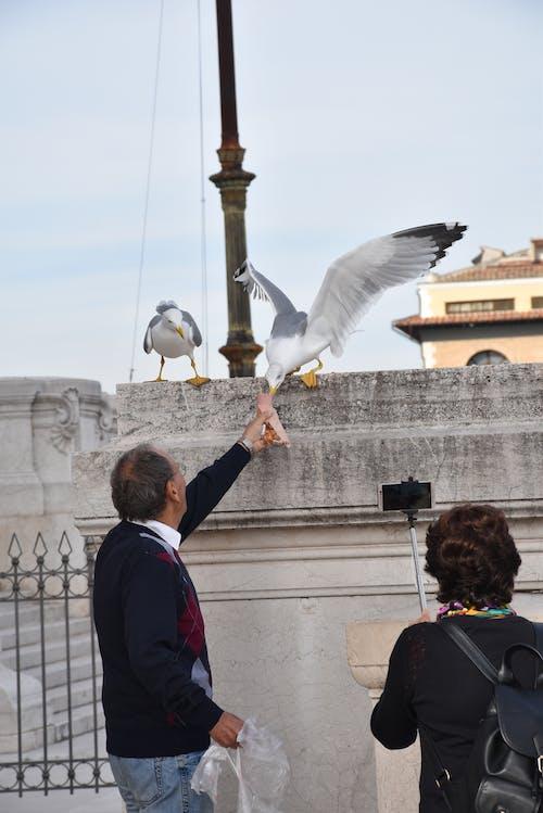Foto profissional grátis de turistas