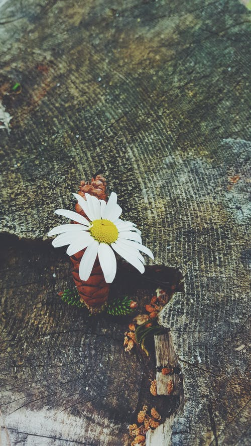 Free stock photo of flower, nature