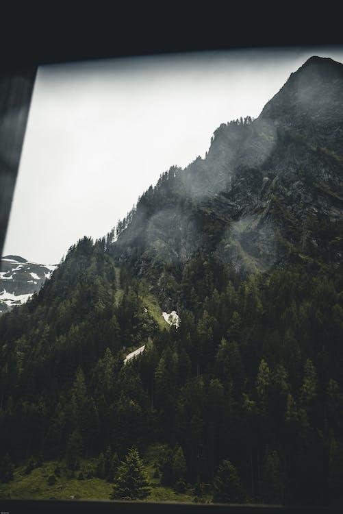 ต้นไม้, ป่า, ภูมิทัศน์