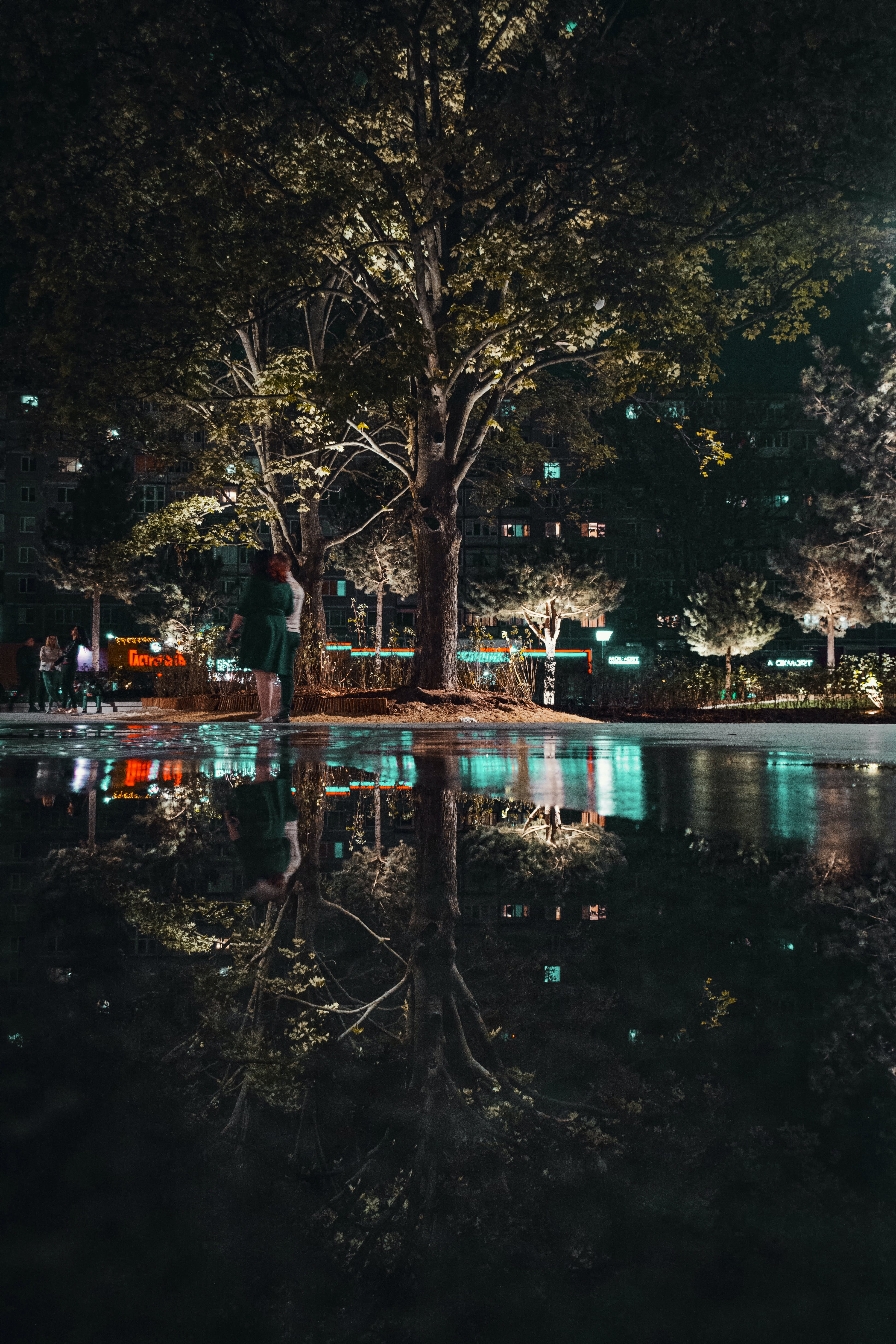 Photo of Green Leafed Trees Near Body of Water during Night