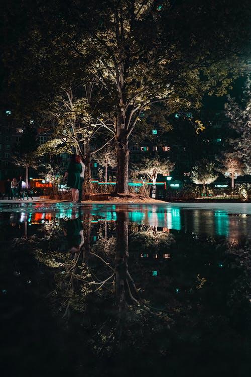 人, 反射, 晚上, 樹木 的 免費圖庫相片
