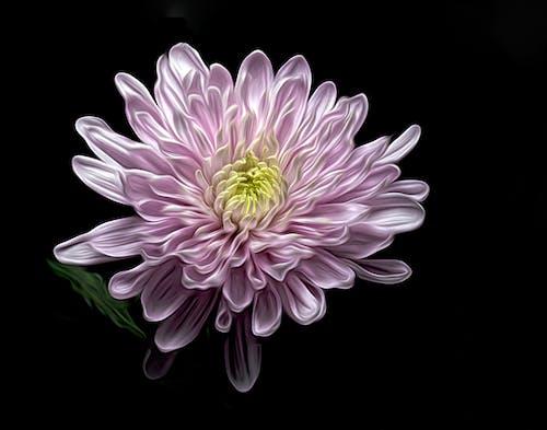 マクロ, 花, 花びらの無料の写真素材