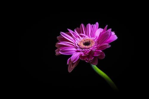 フォーカス, フローラ, 咲く, 明るいの無料の写真素材