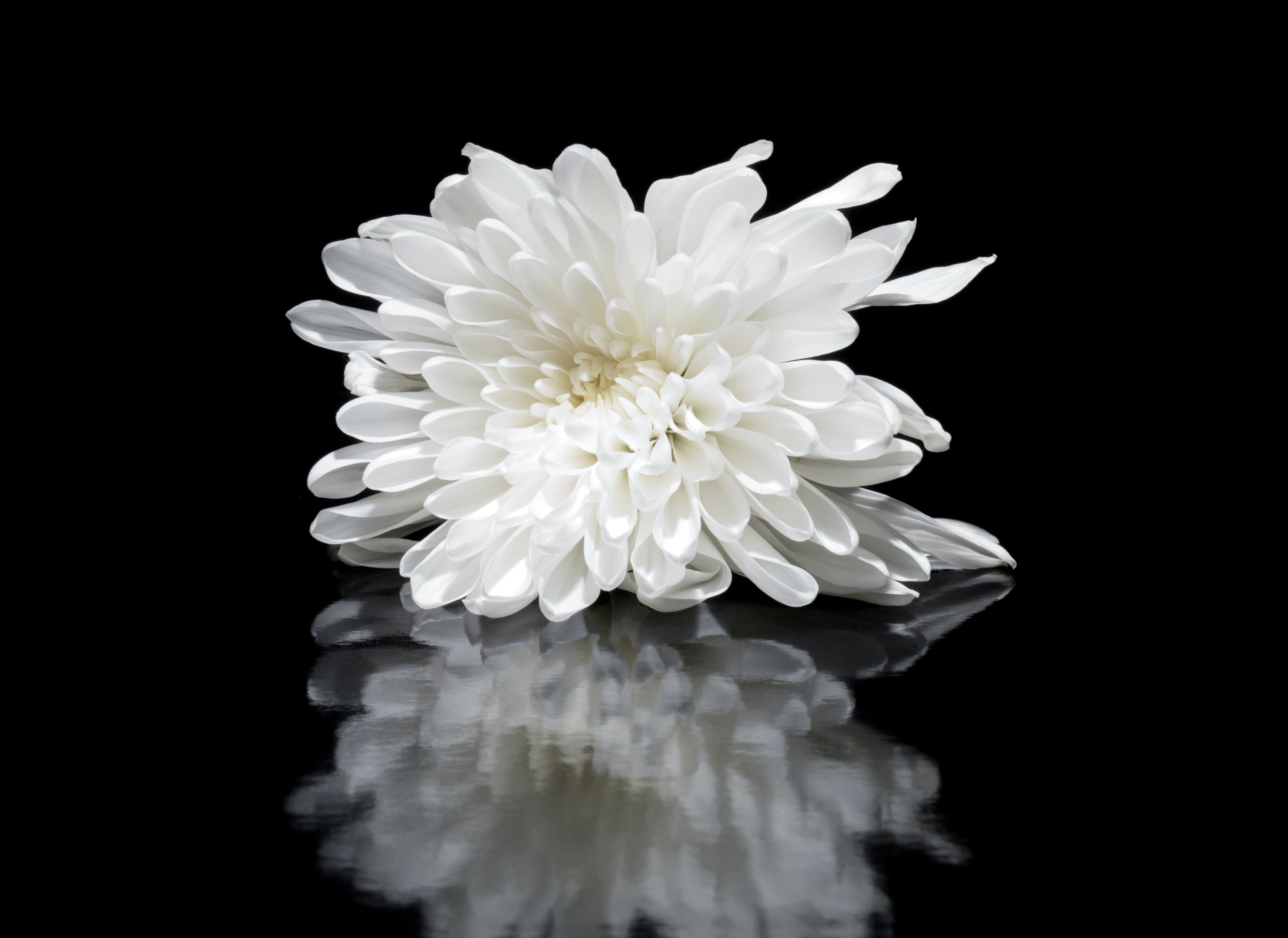 Shallow Focus Photography of White Flower Reflected on Mirror Surface