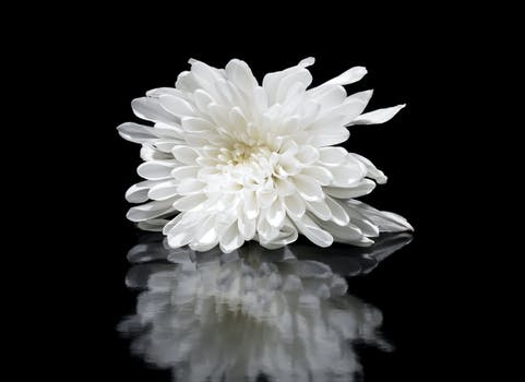 1000 great white flower photos pexels free stock photos shallow focus photography of white flower reflected on mirror surface mightylinksfo